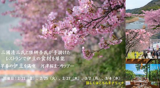 河津桜まつりツアー