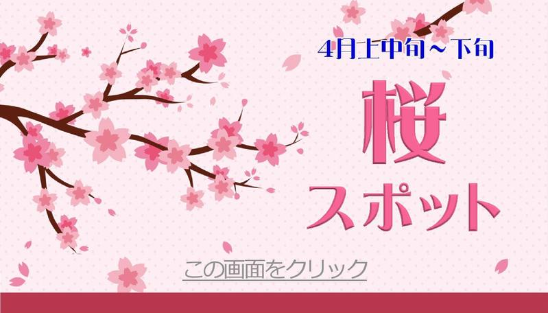 スタッフおすすめ 桜スポット
