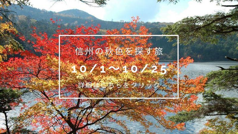 紅葉散策イベント【ランチ付】