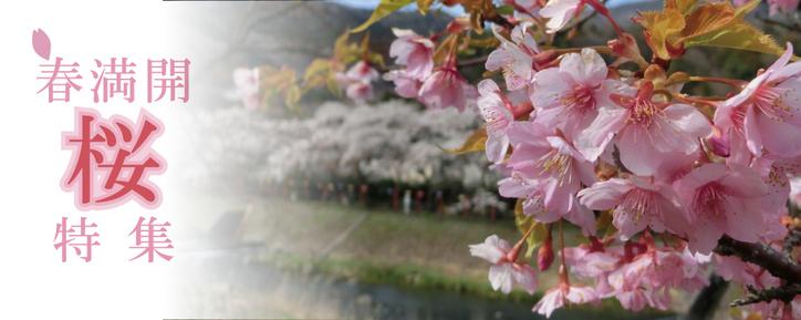 春満開 桜特集