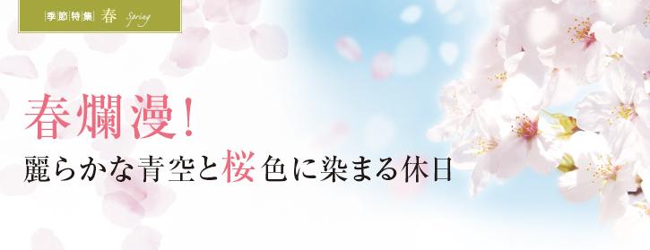 春爛漫!麗らかな青空と桜色に染まる休日